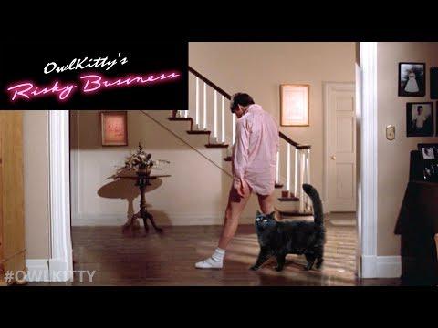 Risky Business with my cat (OwlKitty parody)