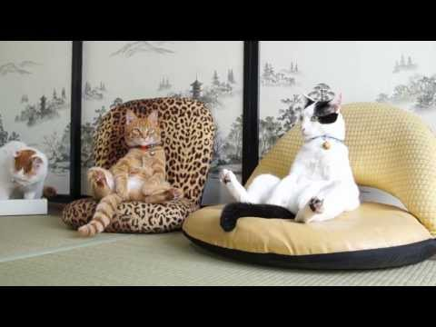 130923 座椅子 Cat sitting on chair