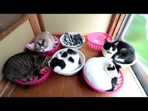 7つのかご猫 200917