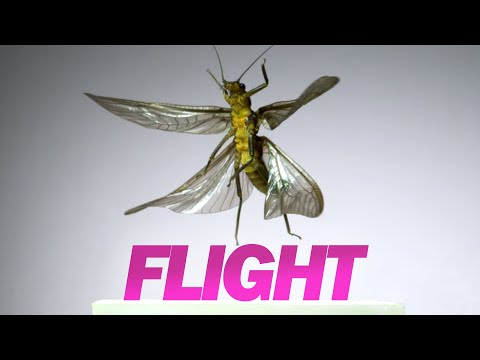 Insect Flight | Capturing Takeoff & Flying at 3,200 FPS