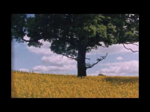 Bibio - Ribbons (Album Trailer)