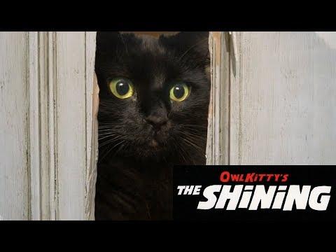 The Shining + My cat (HD)