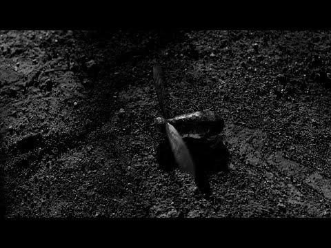 "David Lynch talks about seeing ""frog moths"""