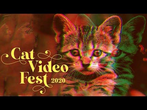 Cat Video Fest 2020 - Official Trailer - Purr - HD