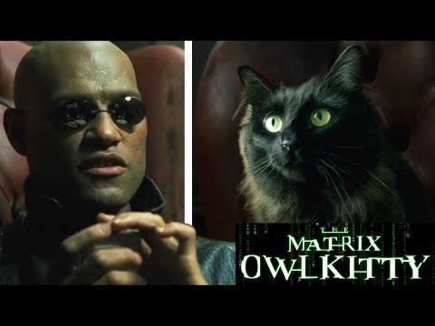 Morpheus meets my Cat (The Matrix)