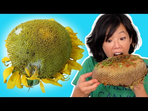🌻How to Eat a SUNFLOWER HEAD