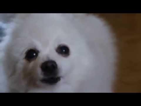 Gabe The Dog - Gabephex Twin