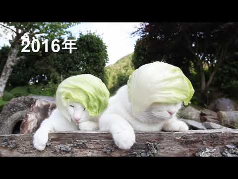 のせ猫 x レタス帽子2020とレタス帽子まとめ 200721