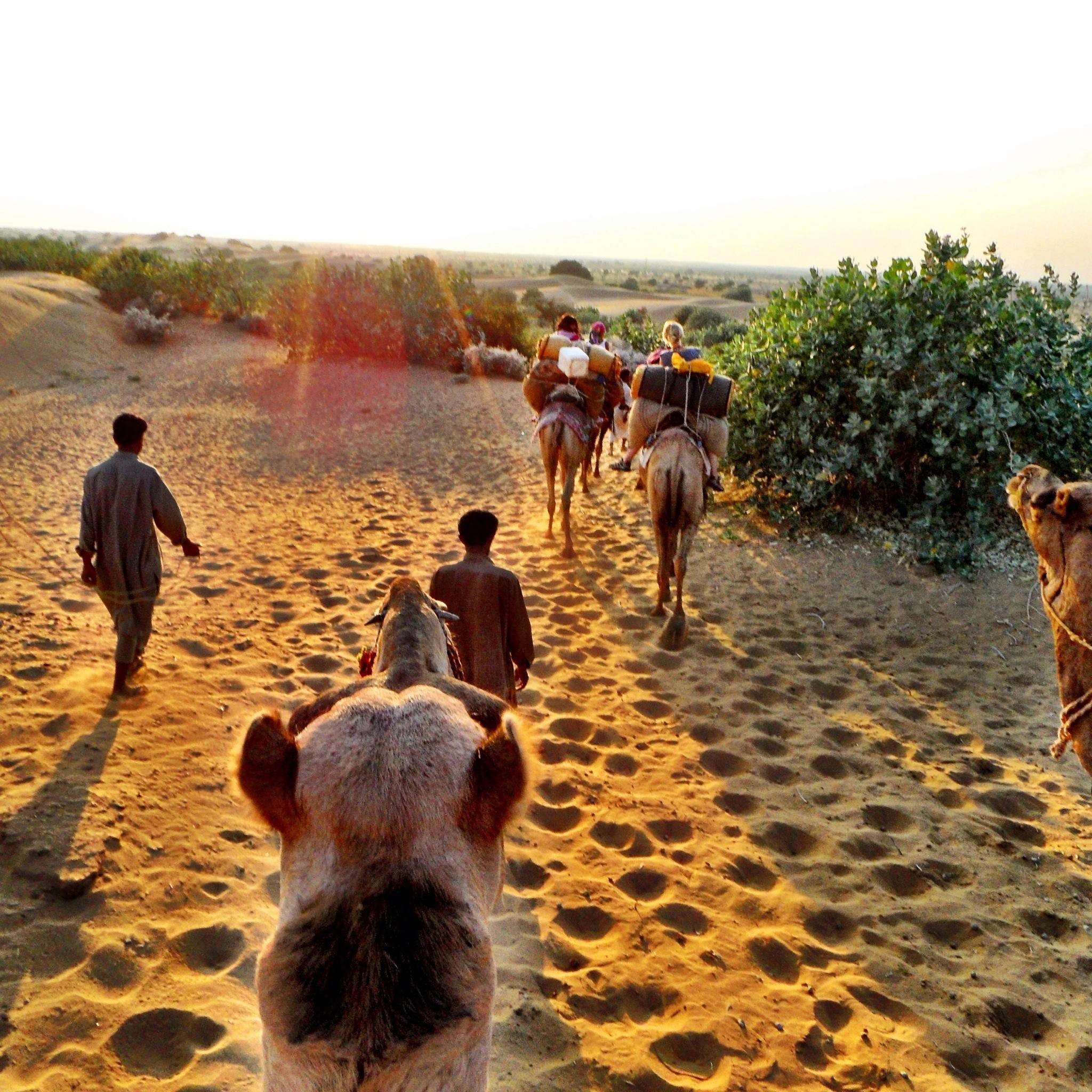 Nordindien: Auf Kamelrücken durch die Wüste Thar