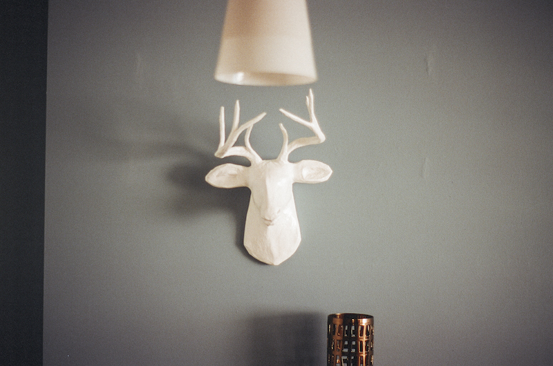 deer-home-wall-2713