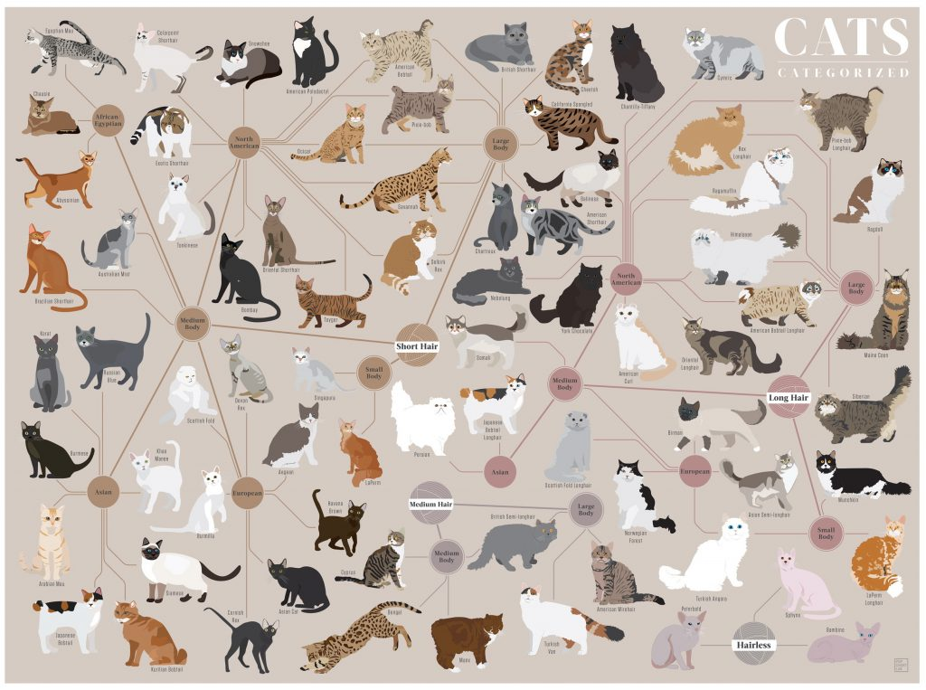 cats_categorized