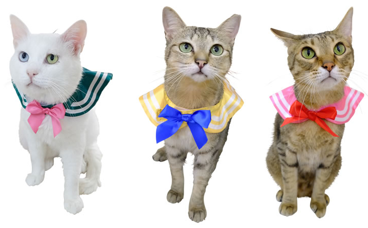 Sailor Moon Suits for Cats