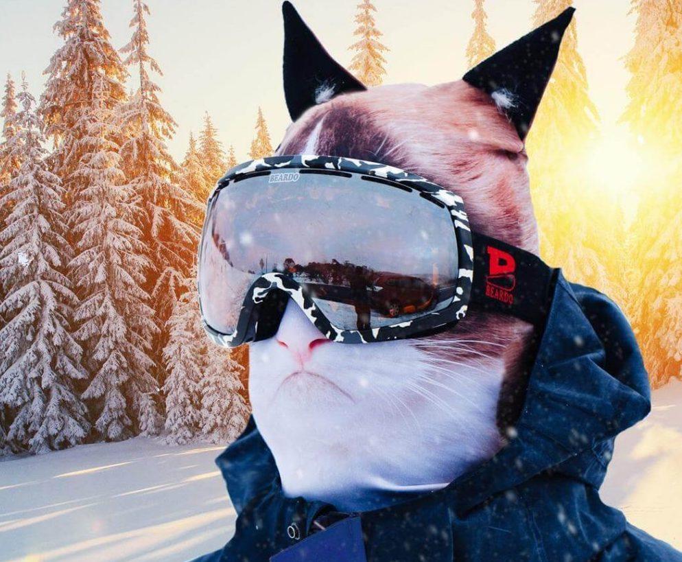 Cat Face Ski Mask ?