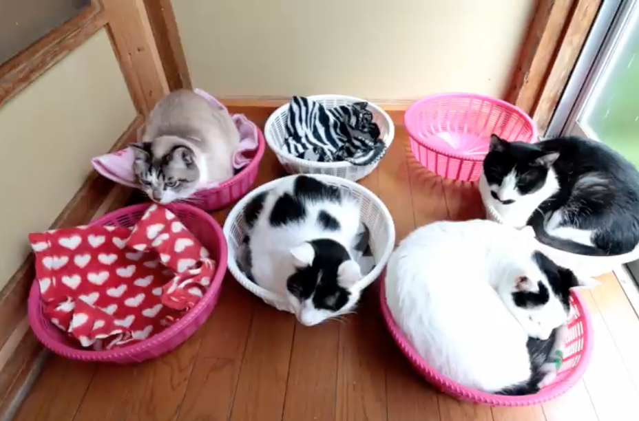 Just Cats sleeping in Baskets 😺