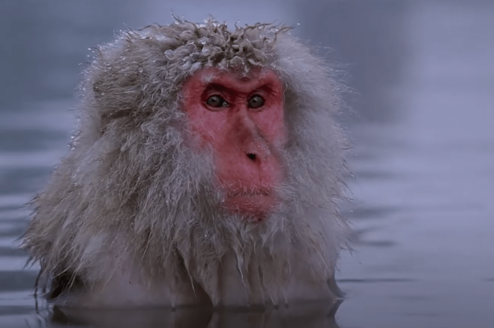 Stone In Focus remake with extra Zen Monkey footage to transcend to